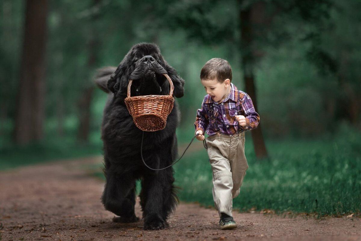 Cani Grandi - Elenco di 36 Razze di Cani grossa taglia