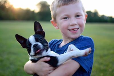 Boston Terrier con bambino