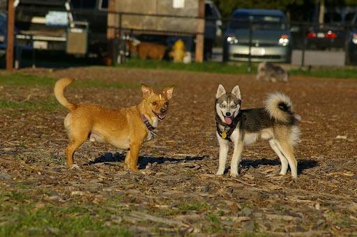 2 cani insieme