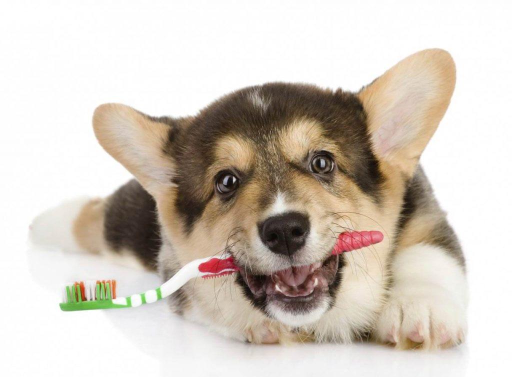 spazzolino da denti per cani
